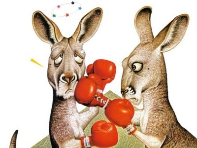 kanguru bertarung