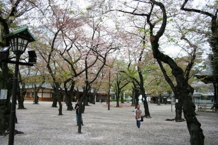 Sakura Yasukuni Shrine
