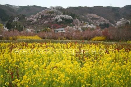 Hanamiyama Park Fukushima Japan