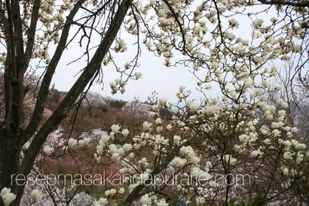Bukit Bunga Sakura