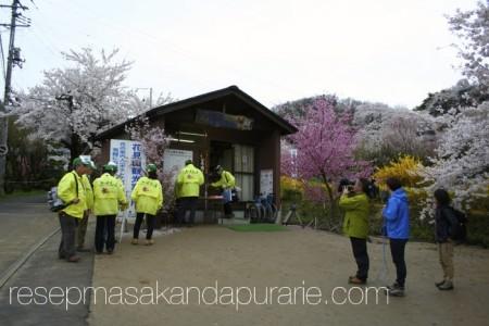 Tenaga Sukarela Jepang Persiapan Menikmati Bunga Sakura