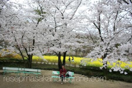 Duduk di Bawah Bunga Sakura